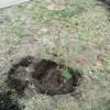 Всероссийская акция «Посади лес»