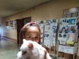 Выставка домашних животных